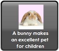 Bunies as children's pets